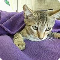 Adopt A Pet :: Lily - Bunnell, FL