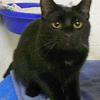 Adopt A Pet :: Bart - Huntsville, AL