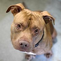 Adopt A Pet :: Jay - Pontiac, MI