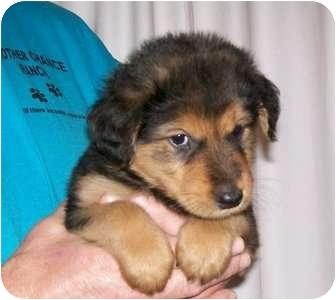 Conesus Ny Golden Retriever Meet Angel A Pet For Adoption