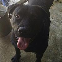 Adopt A Pet :: Rocky - Ringoes, NJ