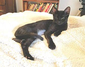 Adopt A Pet :: Lady G  - Dallas, TX