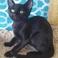 Adopt A Pet :: Vinnie - Saint Robert, MO
