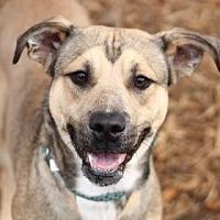 Adopt A Pet :: BANJO - Kyle, TX