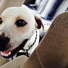 Adopt A Pet :: Rebel