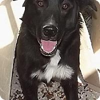 Adopt A Pet :: Willie - Savannah, MO