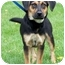 Photo 2 - Shepherd (Unknown Type)/Beagle Mix Puppy for adoption in Plainfield, Illinois - Baxter