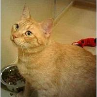 Adopt A Pet :: Chelsea - Stuarts Draft, VA