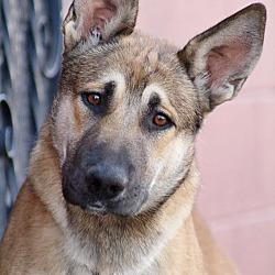 Westside German Shepherd Rescue Of Los Angeles In Los Angeles