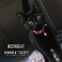 Adopt A Pet :: Midnight - Johnstown, PA
