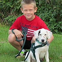 Adopt A Pet :: Darlyn- Foster Home Needed! - Wood Dale, IL