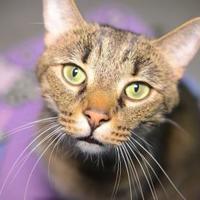 Adopt A Pet :: Smokey Robinson - New Freedom, PA