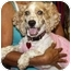 Photo 1 - Cocker Spaniel Dog for adoption in Coral Springs, Florida - Lucy