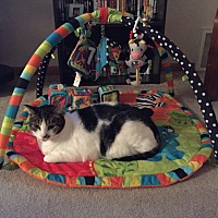 Adopt A Pet :: Jack (COURTESY POST) - Baltimore, MD