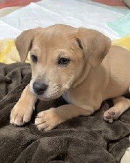Adopt A Pet :: Carly  - Edisto Island, SC