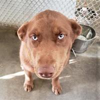 Santa Clara County Animal Shelter In San Martin California