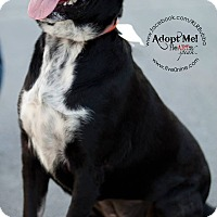 Adopt A Pet :: Abbie - La Crosse, WI