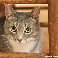 Adopt A Pet :: Boo - Nashville, TN