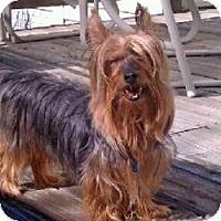 Adopt A Pet :: Pickles - Woodbridge, VA