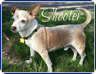 Chihuahua/Terrier (Unknown Type, Small) Mix Dog for adoption in Valley City, North Dakota - Shooter