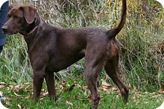 Avon Ny German Shorthaired Pointer Meet Tessa A Pet