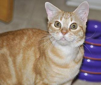 Adopt A Pet :: Georgie  - Liberty, NC