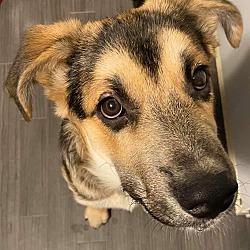 Puppies For Sale In Manitoba Adoptapetcom