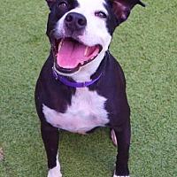 Adopt A Pet :: Pepper - Fort Myers, FL