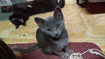 Catsy Cline