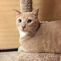 Adopt A Pet :: PRINCE - Brea, CA