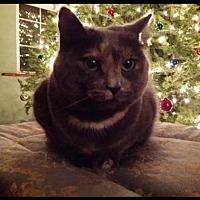 Adopt A Pet :: MiaFarrow - Fenton, MO
