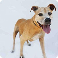 Adopt A Pet :: TILLY - Los Angeles, CA