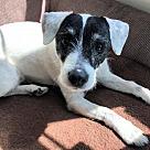 Adopt A Pet :: Tess