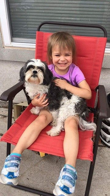 El Paso Tx Shih Tzu Meet Baxter A Pet For Adoption