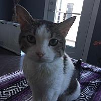Adopt A Pet :: 3962 Marshmallow - JH - Council Bluffs, IA