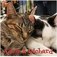 Adopt A Pet :: Richard170922 - Atlanta, GA