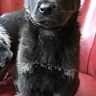 Adopt A Pet :: Maverick