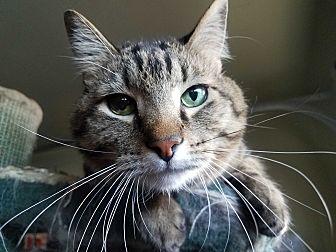 Adopt A Pet :: Elvis  - Edmond, OK