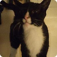 Adopt A Pet :: Sage (COURTESY POST) - Baltimore, MD