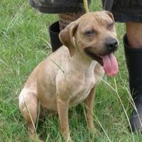 Adopt A Pet :: Britain - Dublin, GA