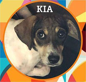 Adopt A Pet :: Kia  - Windsor, NC