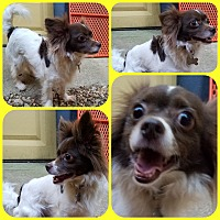 Adopt A Pet :: Riley - Newnan, GA
