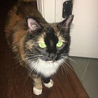 Adopt A Pet :: Boo Boo (COURTESY POST) - Baltimore, MD