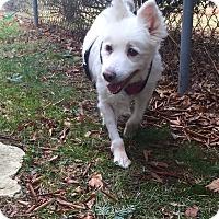 Adopt A Pet :: Penelope - Newtown, CT