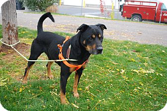 Twin Falls Id Rottweiler Meet Prince Eric A Dog For Adoption