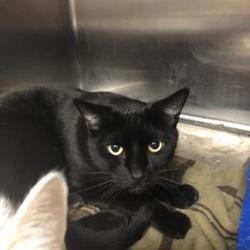 Kittens for Sale in Appleton Wisconsin - Adoptapet com