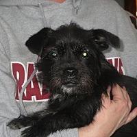 Adopt A Pet :: Kami - Greenville, RI