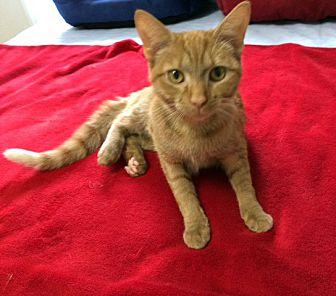 Adopt A Pet :: Scarlett  - Concord, NC