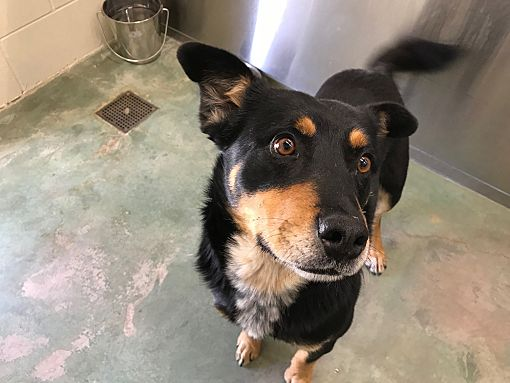 Edgewood Nm Rottweiler Meet Spike A Dog For Adoption