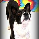 Adopt A Pet :: Paisleigh~video~
